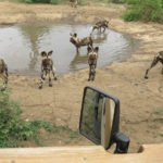 Game Drives (5)
