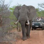 Game Drives (7)